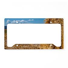 (6) Hay Shasta 2 License Plate Holder