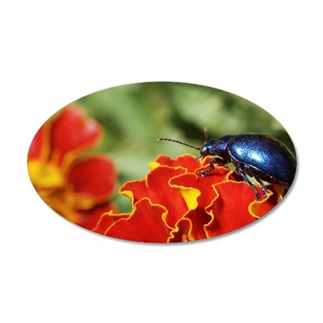 Blue Milkweed Beetle placed 35x21 Oval Wall Decal
