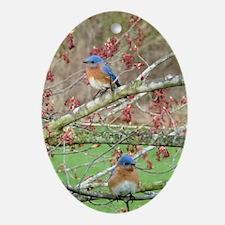 BB6.606x9.86SF Oval Ornament