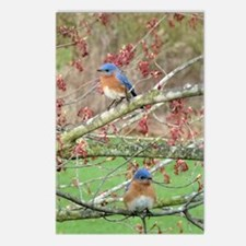 BB6.606x9.86SF Postcards (Package of 8)