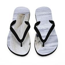 800px-Polar_Bear_-_Alaska2 Flip Flops