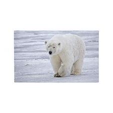 800px-Polar_Bear_-_Alaska4 3'x5' Area Rug