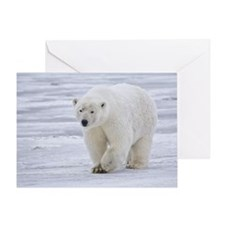 800px-Polar_Bear_-_Alaska4 Greeting Card