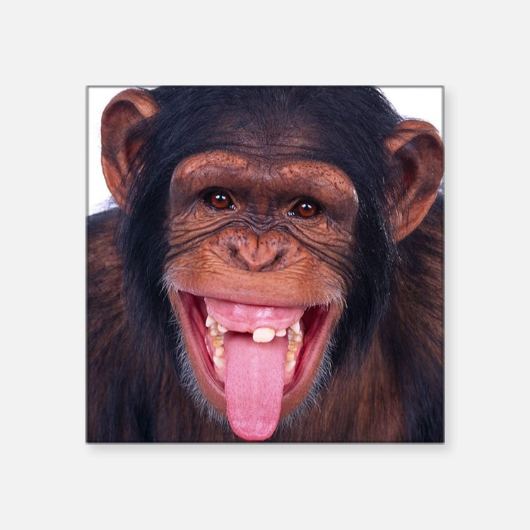 "funnymonkeypuzzle Square Sticker 3"" x 3"""
