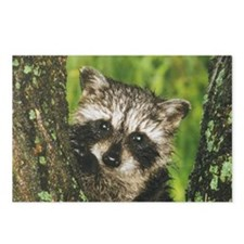 Rc5.78x3.207 Postcards (Package of 8)