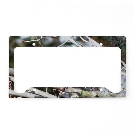 BBMW5.78x3.207SF License Plate Holder