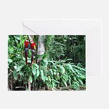 Scarlet Macaw photo -Panama Canal Cr Greeting Card