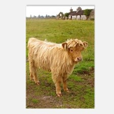 Hieland Coo Postcards (Package of 8)