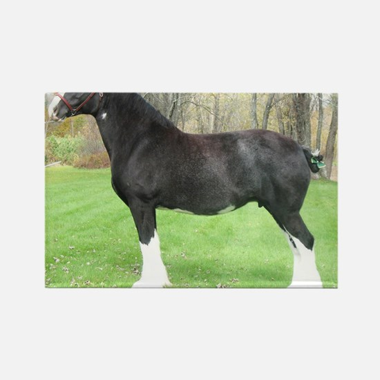 English Shire Mare Rectangle Magnet