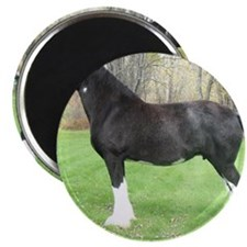 English Shire Mare Magnet