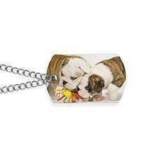 BD pups post Dog Tags