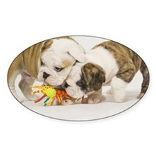 BD pups note Decal
