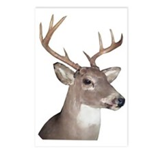 Eight Point Buck Postcards (Package of 8)