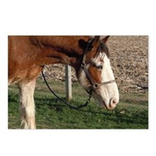 Clydesdale - Blazin TNT Postcards (Package of 8)