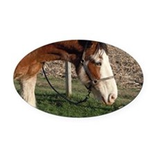 Clydesdale - Blazin TNT Oval Car Magnet