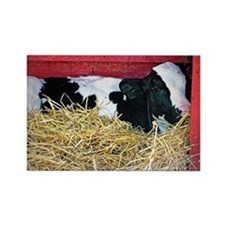 Lazy Cow Rectangle Magnet