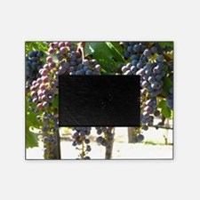 dhpurpgrapes3_11x14 picture frame