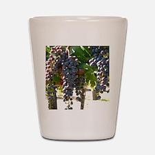 DHPurpGrapes3_11X14 Shot Glass
