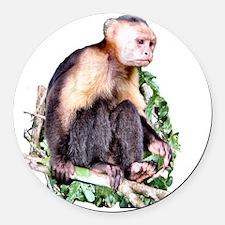 Capuchin  Monkey Round Car Magnet