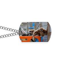 7%253A10%253A11%25205 Dog Tags