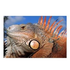 Iguana greet Postcards (Package of 8)