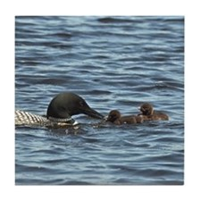 Loon feeding twins Tile Coaster