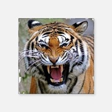 "Atiger shirt Square Sticker 3"" x 3"""