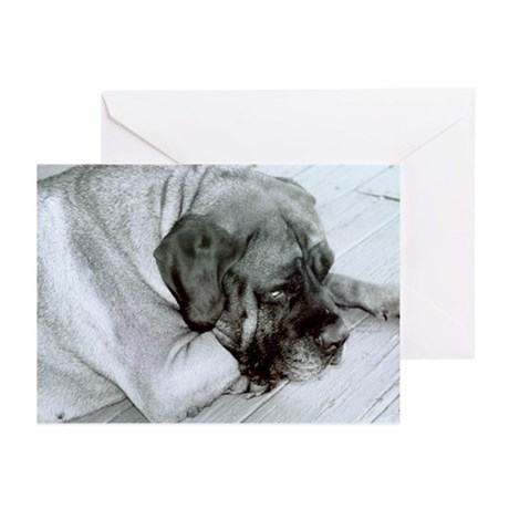 Gracie - Greeting Cards (Pk of 10)