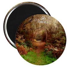 Autumn Path Magnet