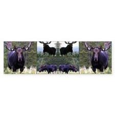 sq moose 8.31x3_edited-1 Bumper Sticker