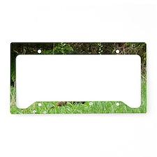 TKLP14.7x9.67 License Plate Holder