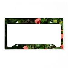 HBa14.7x9.67 License Plate Holder