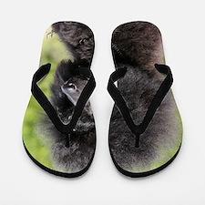 Poodle 9Y788D-048 Flip Flops