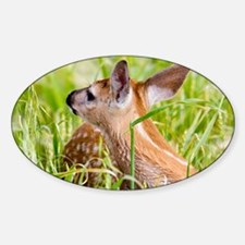 Walking with Fawns Decal