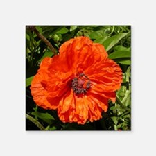 "Poppy Square Sticker 3"" x 3"""