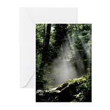 God's Forest (Pk of 10)