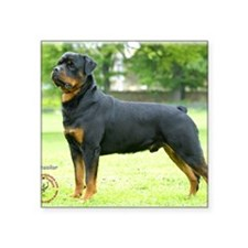 "Rottweiler 8T039D-02 Square Sticker 3"" x 3"""