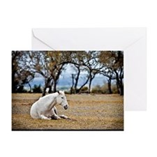 01jan-dk-11.5x9_-White-Horse Greeting Card