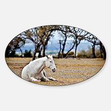 01jan-dk-11.5x9_-White-Horse Decal