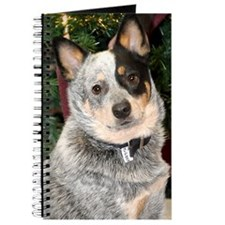 cattle-dog-photo2 Journal