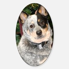 cattle-dog-photo2 Decal