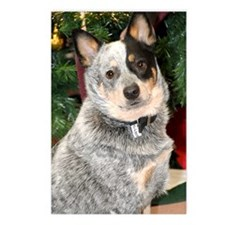 cattle-dog-photo Postcards (Package of 8)