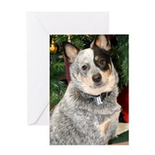 cattle-dog-photo Greeting Card