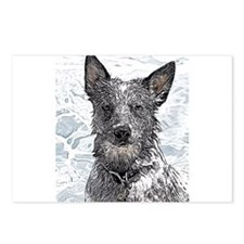Wiley the Cattle Dog Postcards (Package of 8)