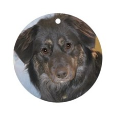 Australian Shepherd Photo Round Ornament