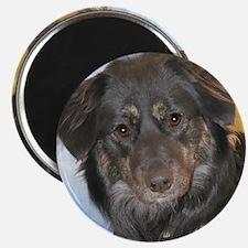 Australian Shepherd Photo Magnet