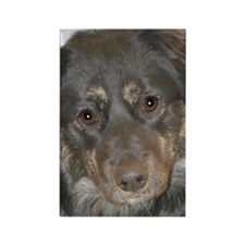 Australian Shepherd Photo Rectangle Magnet