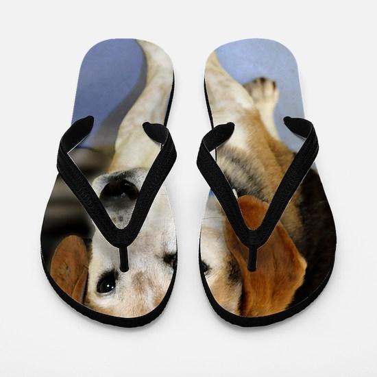 beagle9x12 Flip Flops