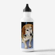 beagle10x14 Water Bottle