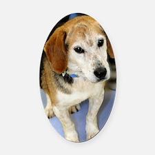 beagle10x14 Oval Car Magnet